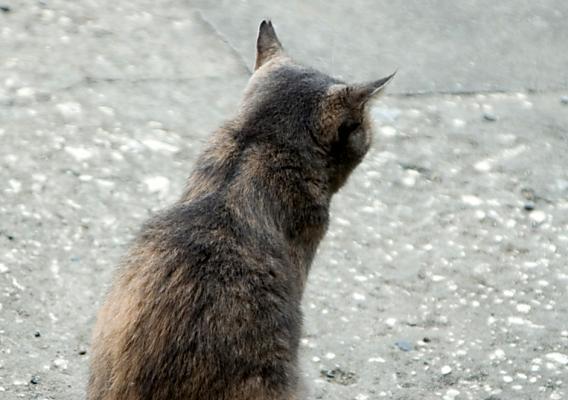 「小さい頃からの猫背を治したい」と来られた方への骨盤矯正
