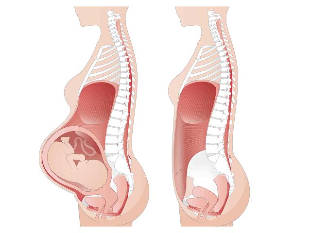 妊娠中の骨盤